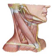 Increase ROM in neck and shoulders